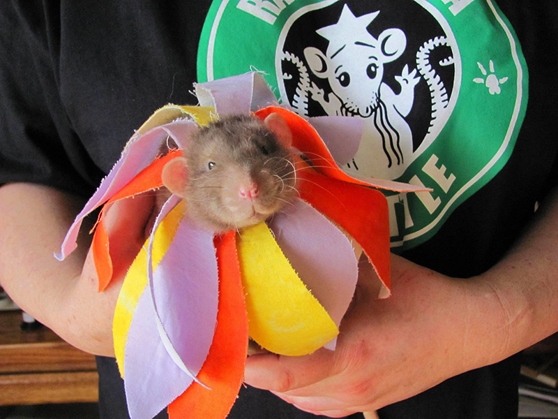 Rat in a flower costume